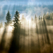 Krajina lesných duchov