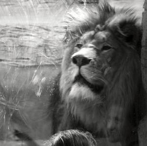 Dievča a lev