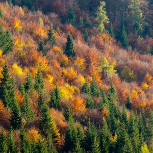 Jeseň v Slovenskom raji