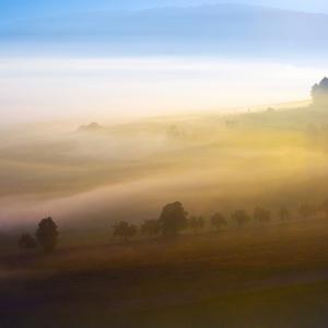 V rannej hmle