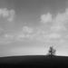 osamely zivot