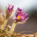 Od púčika po kvet