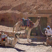 Camel Station (Pohoda, klídek a