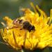 Muška na muche