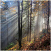 ...v rozprávkovom lese...