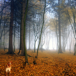 ..do lesa
