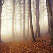 ako som drevo do lesa nosil