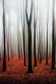 ako strom v lese