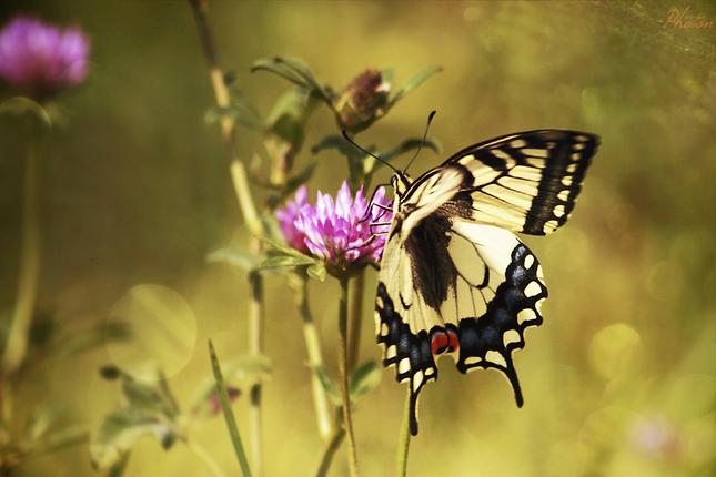 motýľí efekt