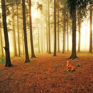 do ríše lesov