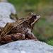 sedíš ako žaba na prameni!