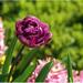 Kvet pre tento svet :-)