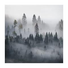 Tichý dych lesa