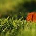 :: leaf ::
