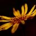 V hĺbke kvetu 2