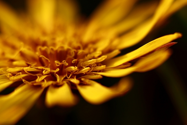 V hĺbke kvetu