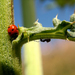 svet hmyzu