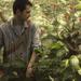 Gardener II