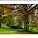 National Botanic Garden,Dublin