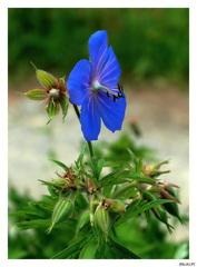 Kvet ktorý ma lákal
