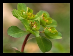 Dnešný zimný kvet in Natura