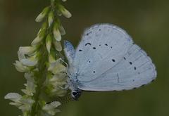 Modrý motýľ a kvet