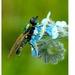 Jeden maličký hmyz