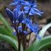 Pre modrú krásu