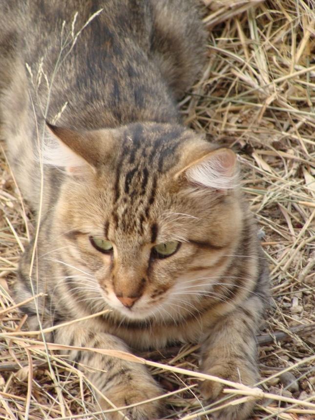 pekná pekná mačička