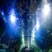 Caribbean underwater life