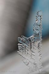 ...V zajatí ľadu...