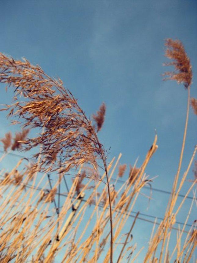jarno - jesenná