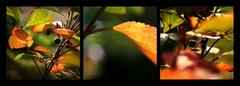 triptych predjesennej záhrady