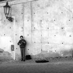 huslista pod hradom