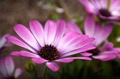 jar z kvetináča