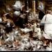 Pani s holubmi