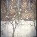 Zátišie v snehu