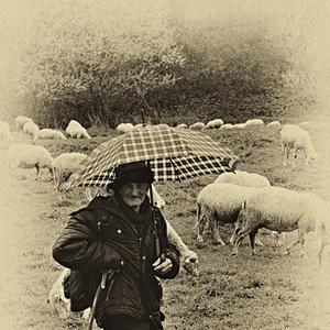 Aj v daždi sa pásť musí