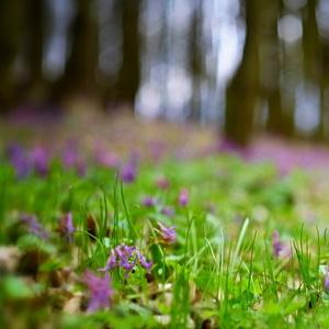 V jarnom lese