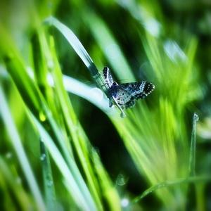 Ráno v tráve