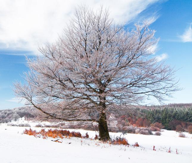 Zima v Pohronskom Inovci