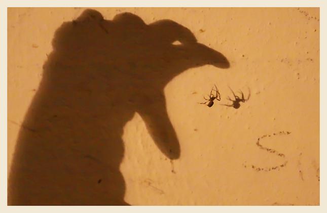 Hra s tieňmi