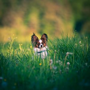 Psie portréty