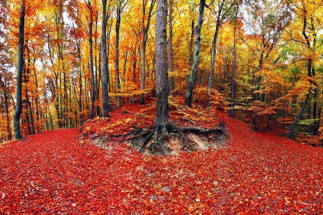 Chodníček jesenný