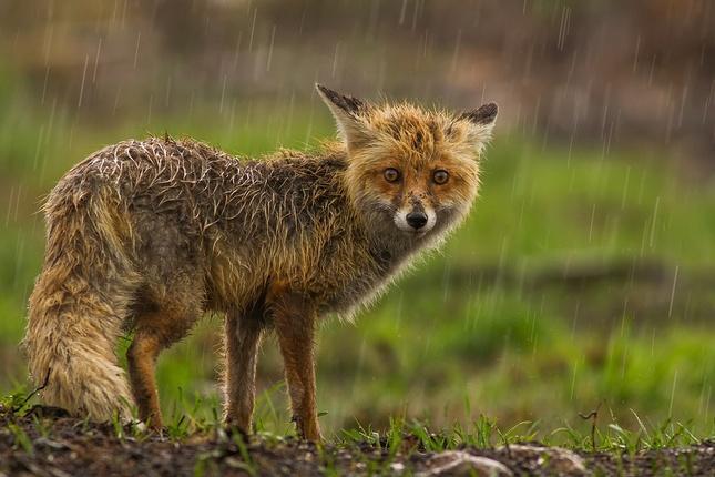 ...a stále prší