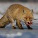 Líška a kus žrádla
