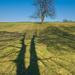 my dva stromy