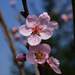 spomienka na jar