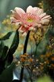Ked v kuchyni rastu kvety