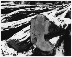 premeny dreva I